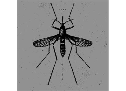 HYDA8 Hydra Head  Isis Mosquito Control EP (LP)